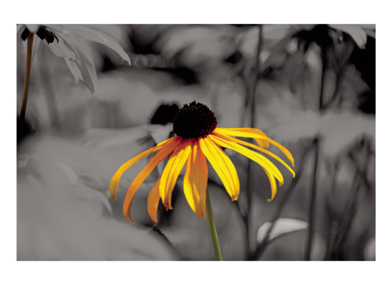 art prints - Marigold by Victor Rafael