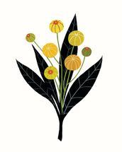 Mustard Seed Pods by Britt DeMaris