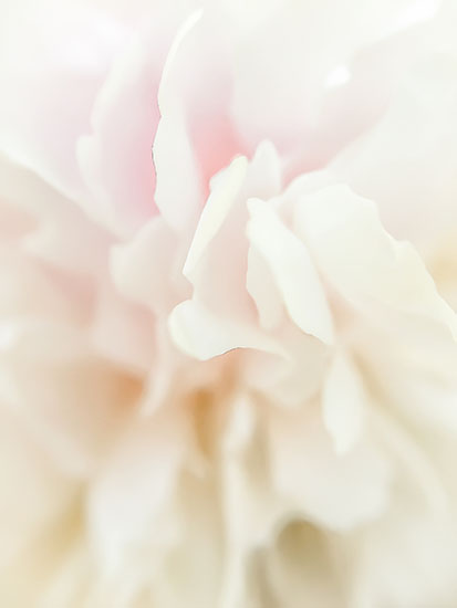 art prints - Subtle Petals by Jennifer Ritterman