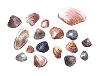 Seashells by Nadiia Nemchenko