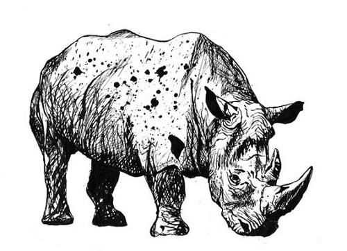art prints - Ready to Rhino by Rachel Knight