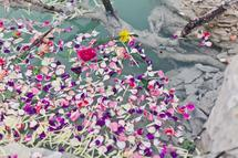 petals in the quarry #1 by Kelly Christine