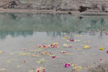 petals in the quarry #2