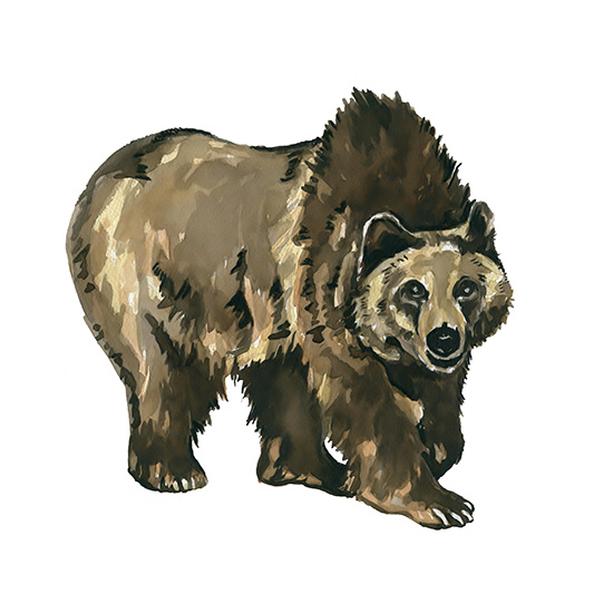 art prints - Lovely Little Grizzly by HippieHoppy