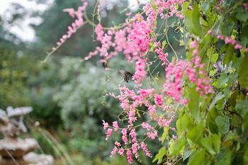 krause springs butterfly