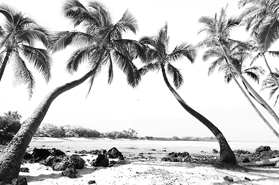 art prints - Palm Tree Bay by Bree Madden