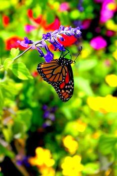 A Flutter of Color