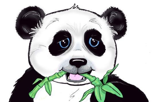 art prints - Panda Bear by Beverly Murphy