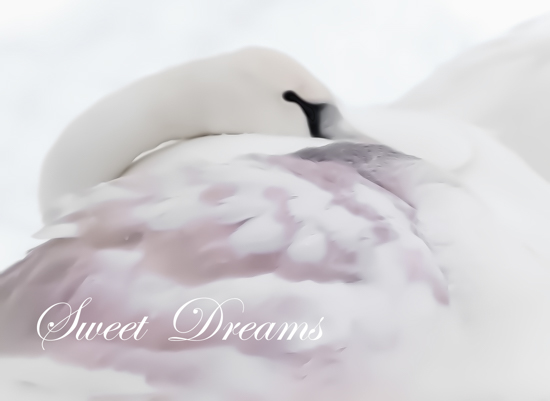 art prints - Sweet Dreams by by Kim M. Herzog Photography