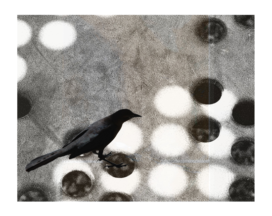 art prints - black bird on game board by Patricia Robitaille