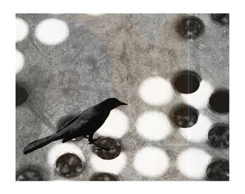 black bird on game board
