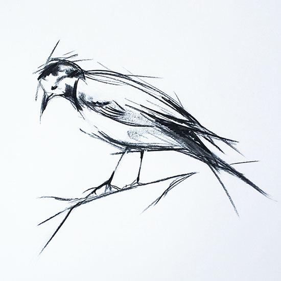 art prints - On a Limb by Sarah Nobles