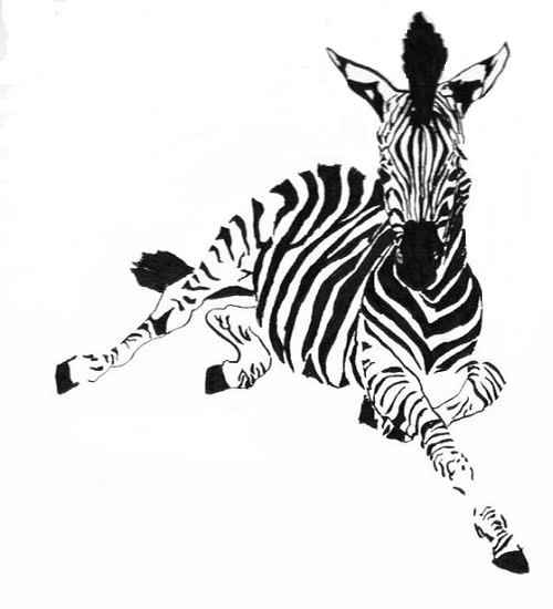 art prints - All in the Zebra Stripes by Rachel Knight