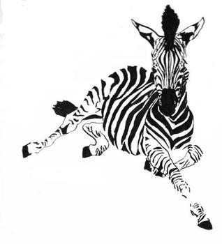 All in the Zebra Stripes