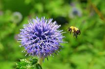 Bee-lieve by Madeleine