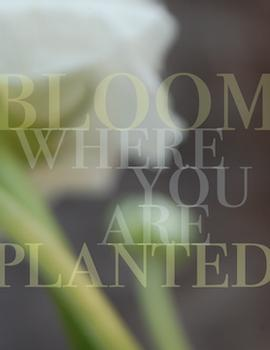 bloom + planted