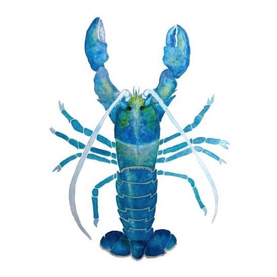 art prints - Blue Lobster Watercolor by Shannon Mayhew