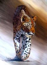 Spots On The Move by Noelle