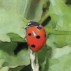 @ Lady Bug Lane