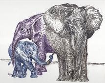 Elephant Family by Lauren Haule