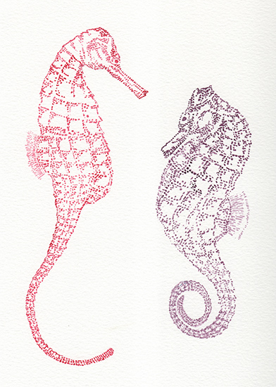 art prints - Shy Seahorses by Lauren Haule