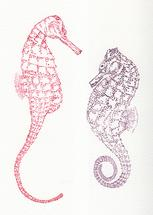 Shy Seahorses by Lauren Haule