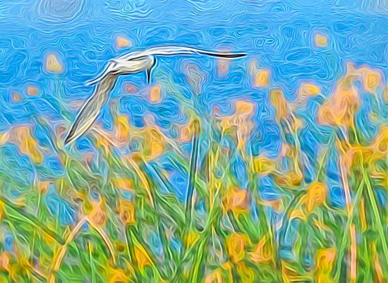 art prints - Blue Sky Vibe by by Kim M. Herzog Photography