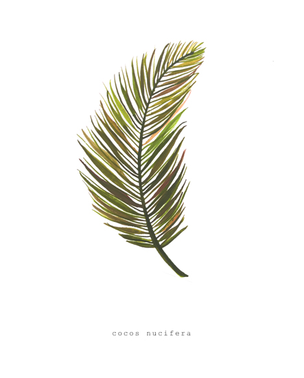 art prints - Cocos Nucifera by Kortnee Desatoff