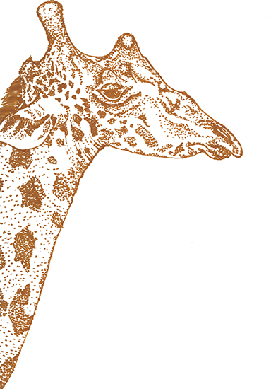 art prints - Elegant Giraffe by Lauren Haule