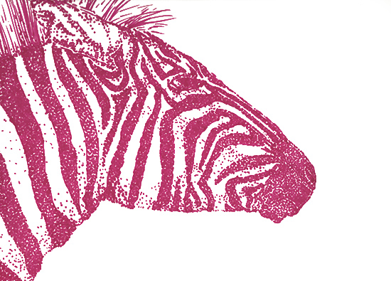 art prints - Magenta Zebra by Lauren Haule