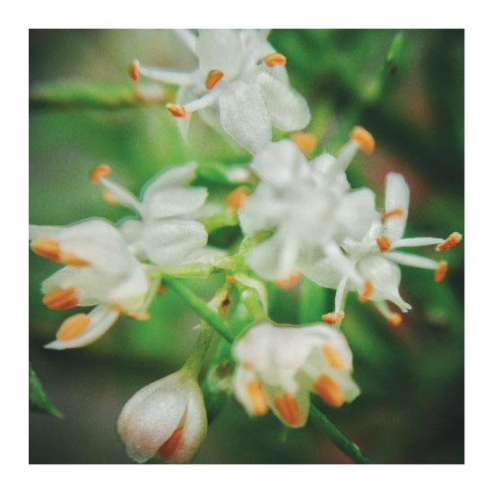 art prints - Botanical Plant by Joecel Grace D. Codera