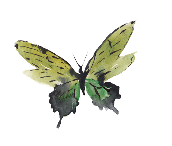 art prints - Green Butterfly by Marina Eiro