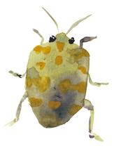 Green bug by Marina Eiro