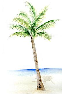 A Palm Tree to relax under