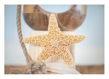 Nautical Star Fish