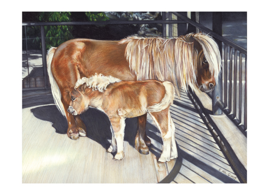 art prints - Miniature Horses, Mama and Baby by Elaine Strocher