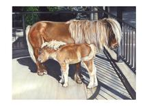 Miniature Horses, Mama... by Elaine Strocher