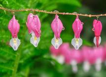 Springtime Dewdrops by by Kim M. Herzog Photography