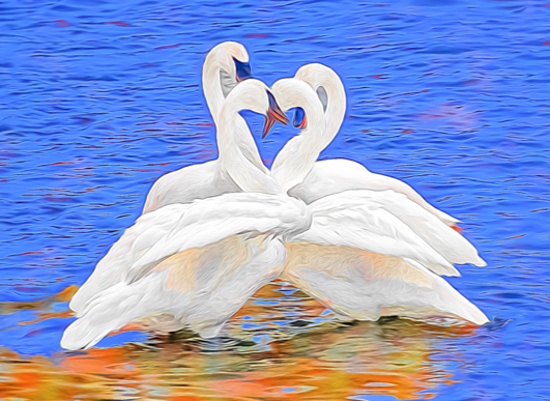 art prints - Swan Hearts by by Kim M. Herzog Photography