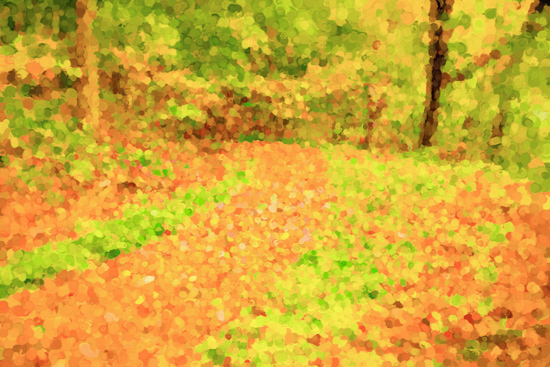 art prints - Woodland Path by by Kim M. Herzog Photography