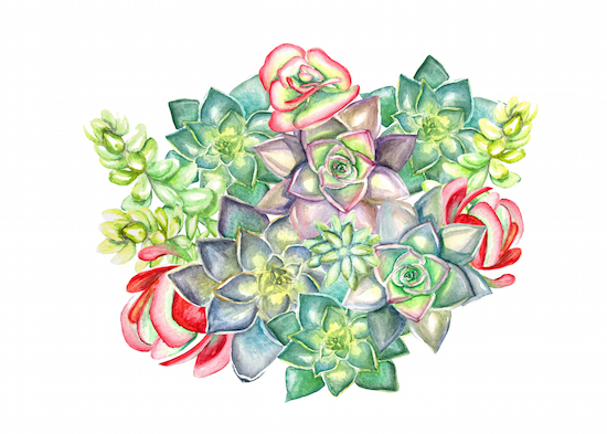 art prints - Bouquet of Succulent! by Tram Nguyen-Colwin