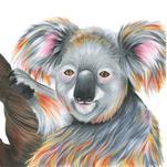 Sleepy Koala by Meg Smiley