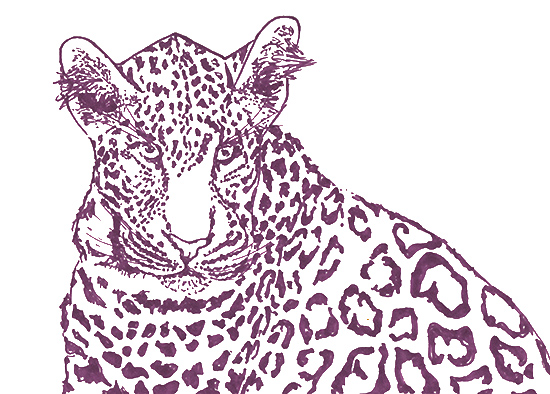 art prints - Leopard Stare by Lauren Haule