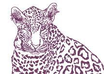 Leopard Stare by Lauren Haule