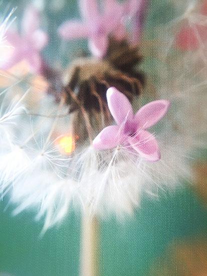 art prints - Lilacs & Wishes by Jennifer Ritterman