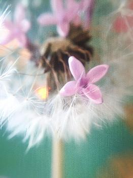 Lilacs & Wishes