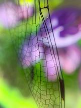 Dragonfly Wing by Jennifer Ritterman