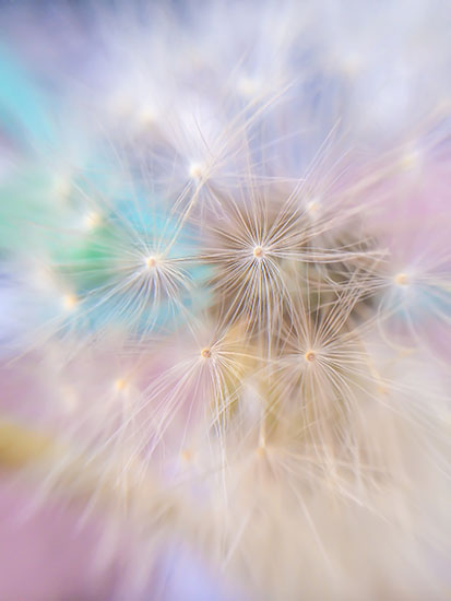 art prints - Sweet Dream Wishes by Jennifer Ritterman