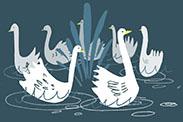 art prints - Swans a Swimming by Cait Brennan