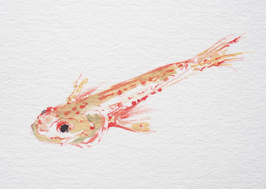 art prints - Freshwater Fish by Nina Lewis